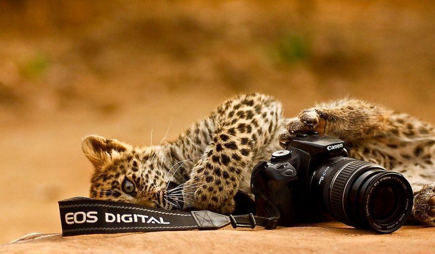 Animais ficando confortáveis com equipamento fotográfico (1)
