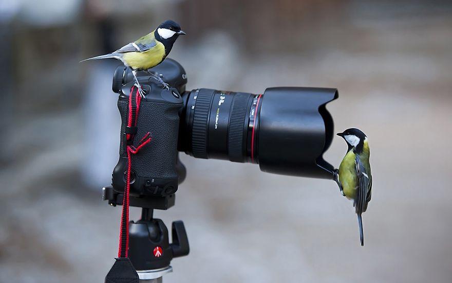 Animais ficando confortáveis com equipamento fotográfico (11)