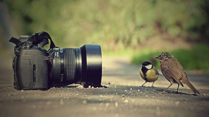 Animais ficando confortáveis com equipamento fotográfico (12)