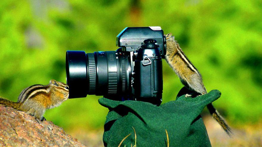 Animais ficando confortáveis com equipamento fotográfico (13)