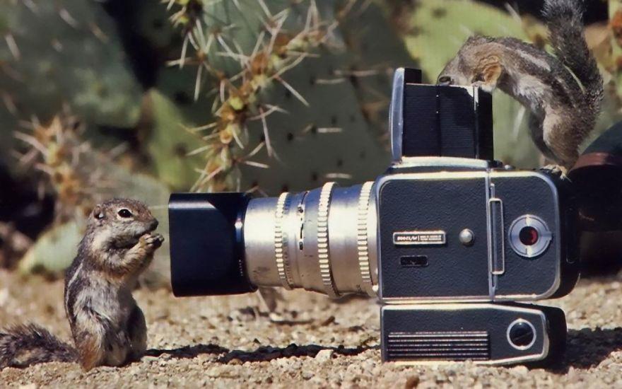 Animais ficando confortáveis com equipamento fotográfico (14)