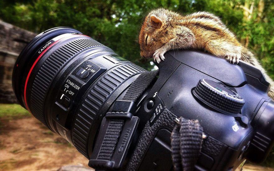 Animais ficando confortáveis com equipamento fotográfico (15)