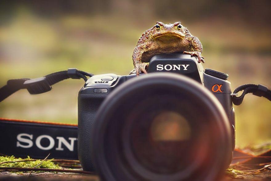 Animais ficando confortáveis com equipamento fotográfico (16)