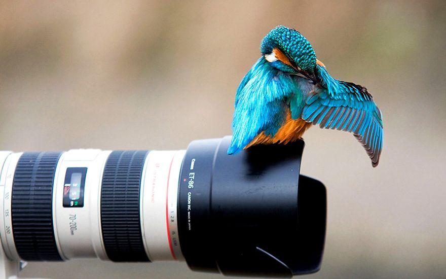 Animais ficando confortáveis com equipamento fotográfico (17)