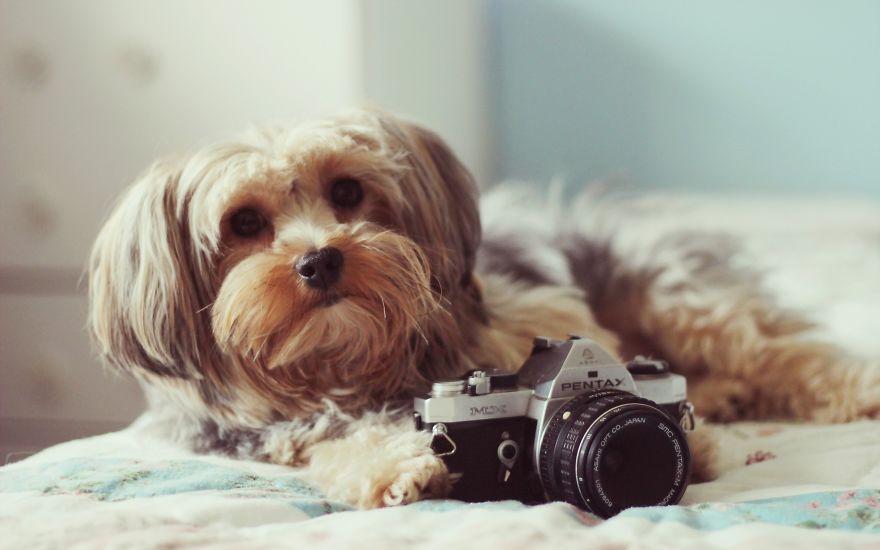 Animais ficando confortáveis com equipamento fotográfico (18)