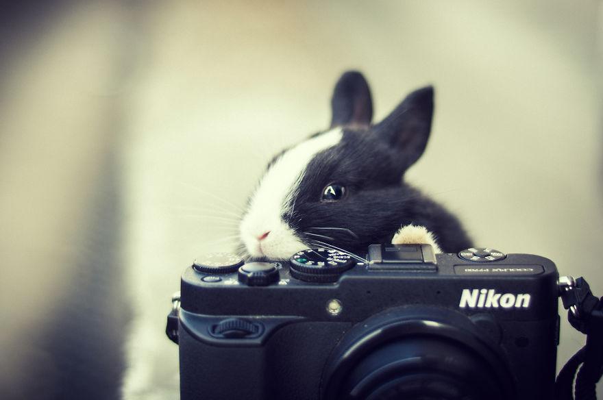 Animais ficando confortáveis com equipamento fotográfico (19)