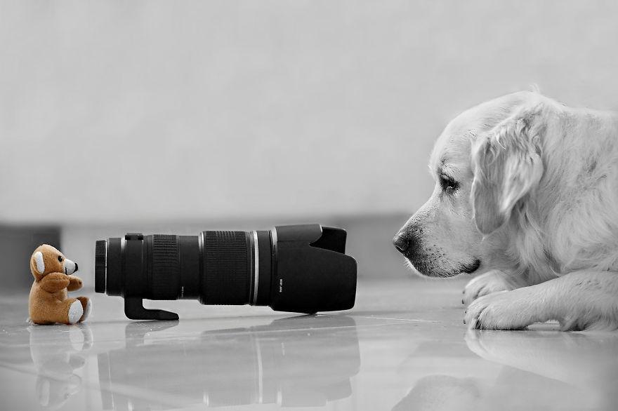 Animais ficando confortáveis com equipamento fotográfico (20)