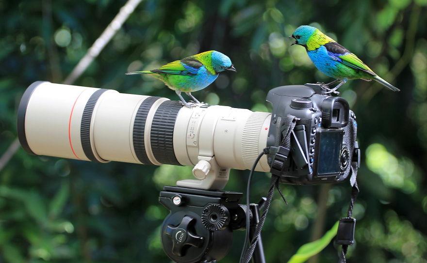 Animais ficando confortáveis com equipamento fotográfico (21)