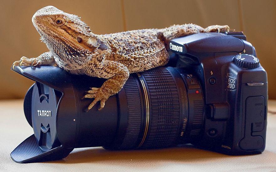 Animais ficando confortáveis com equipamento fotográfico (22)