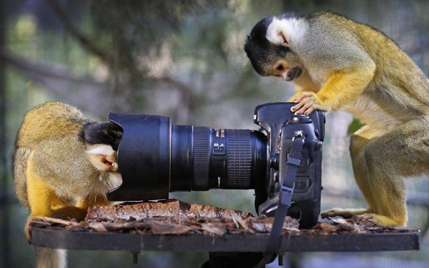 Animais ficando confortáveis com equipamento fotográfico (23)