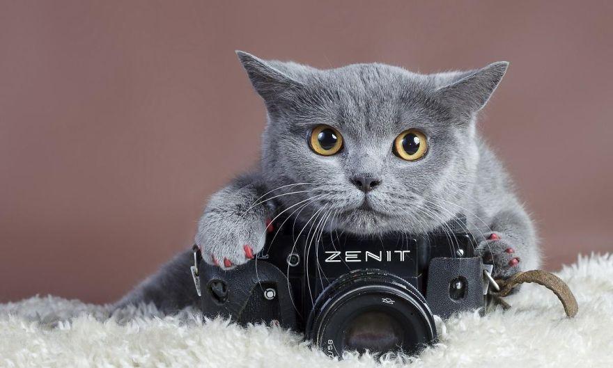 Animais ficando confortáveis com equipamento fotográfico (24)
