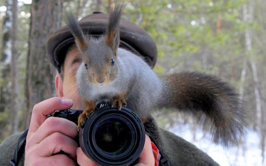 Animais ficando confortáveis com equipamento fotográfico (25)