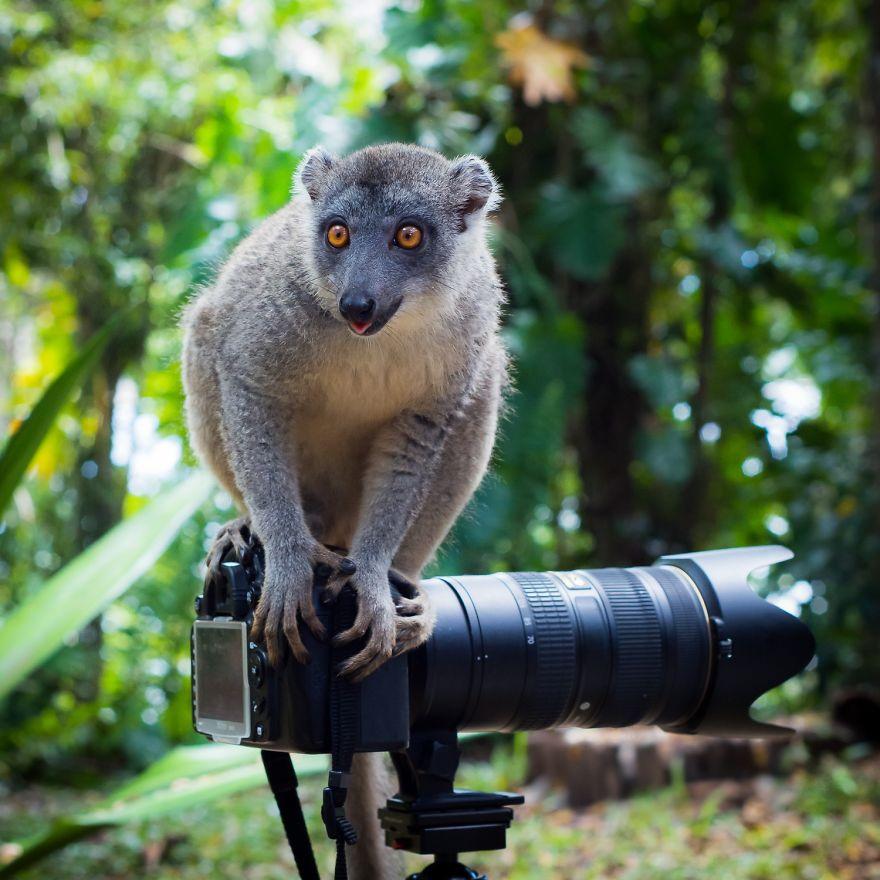 Animais ficando confortáveis com equipamento fotográfico (3)