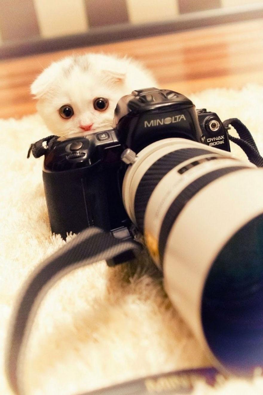 Animais ficando confortáveis com equipamento fotográfico (5)
