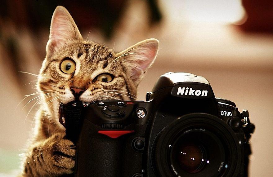 Animais ficando confortáveis com equipamento fotográfico (6)