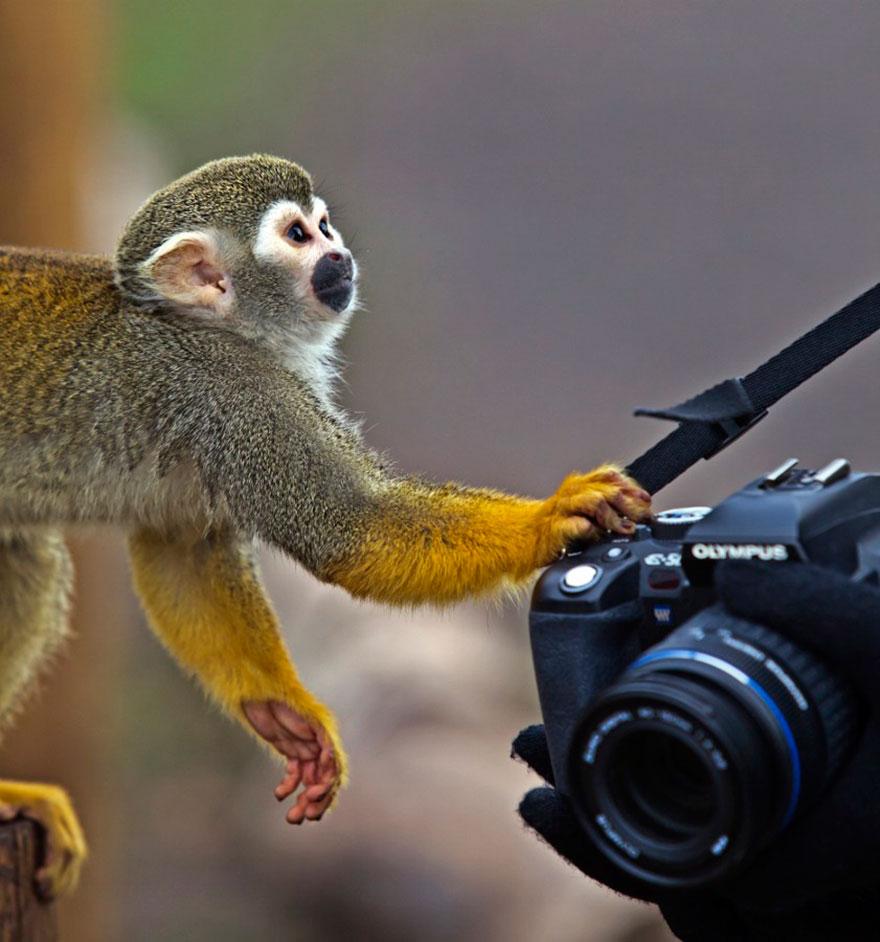 Animais ficando confortáveis com equipamento fotográfico (7)