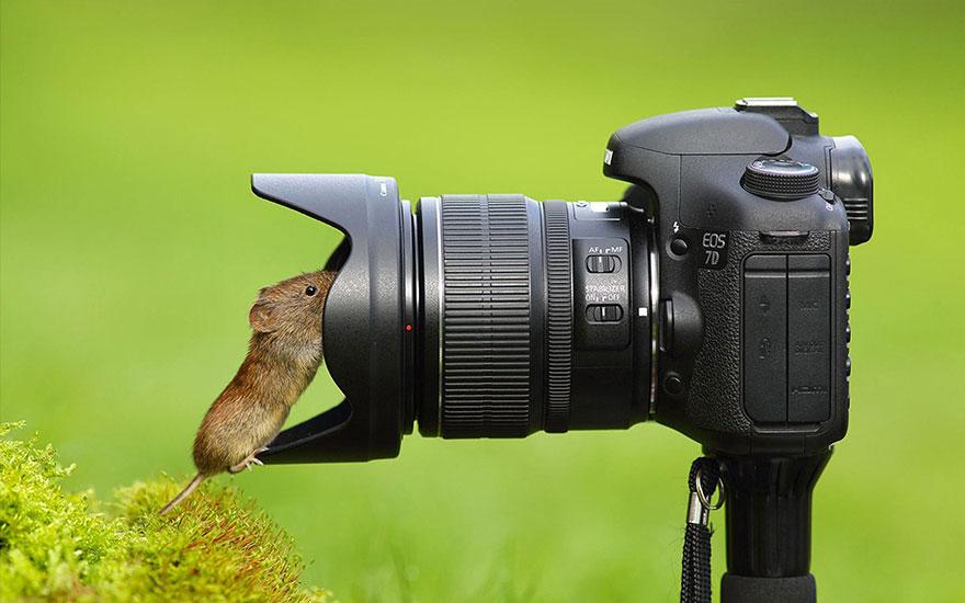 Animais ficando confortáveis com equipamento fotográfico (8)