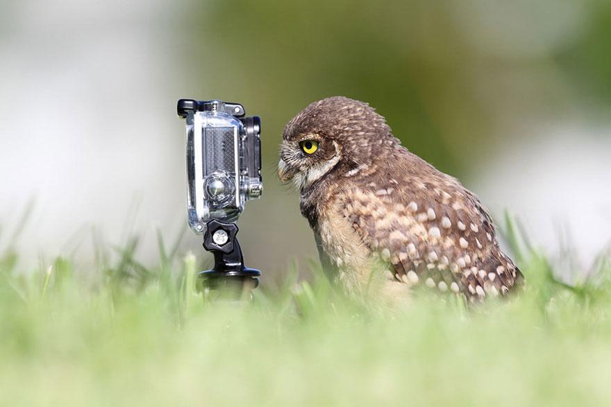 Animais ficando confortáveis com equipamento fotográfico (9)