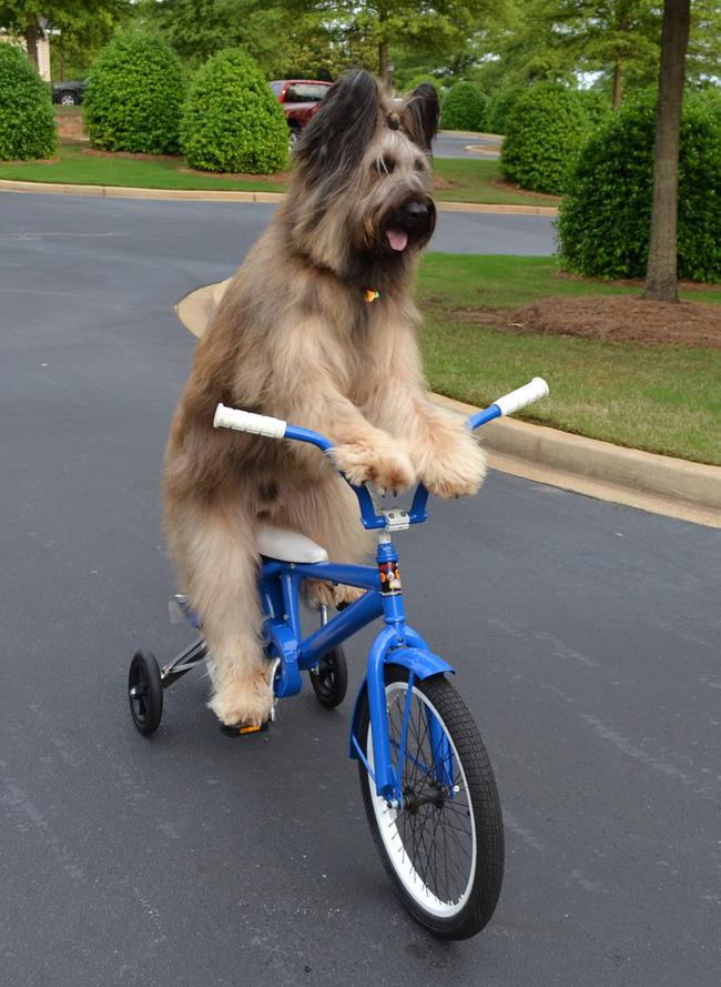 Cães-independentes-que-não-precisam-de-seus-donos  (11)