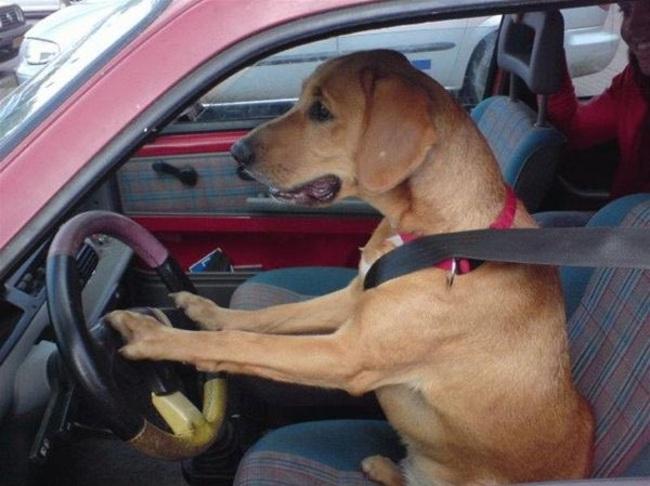 Cães-independentes-que-não-precisam-de-seus-donos  (12)