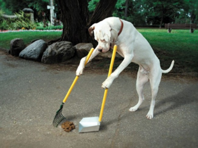 Cães-independentes-que-não-precisam-de-seus-donos  (13)
