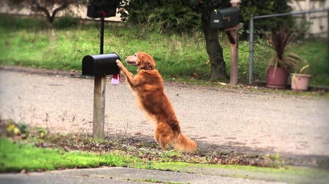 Cães-independentes-que-não-precisam-de-seus-donos  (14)