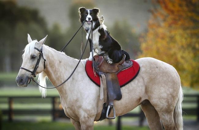 Cães-independentes-que-não-precisam-de-seus-donos  (4)