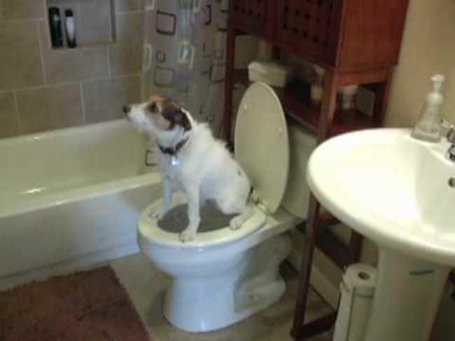 Cães-independentes-que-não-precisam-de-seus-donos  (5)