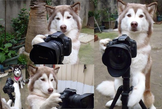 Cães-independentes-que-não-precisam-de-seus-donos  (6)