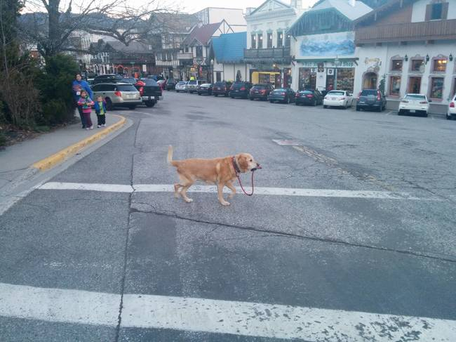 Cães-independentes-que-não-precisam-de-seus-donos  (7)