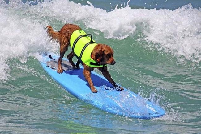Cães-independentes-que-não-precisam-de-seus-donos  (8)