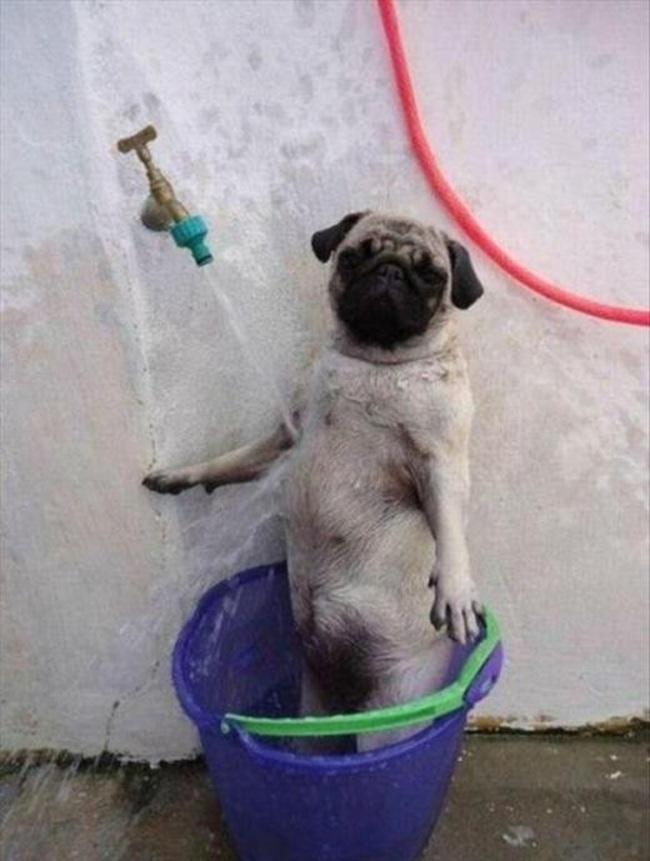Cães-independentes-que-não-precisam-de-seus-donos  (9)
