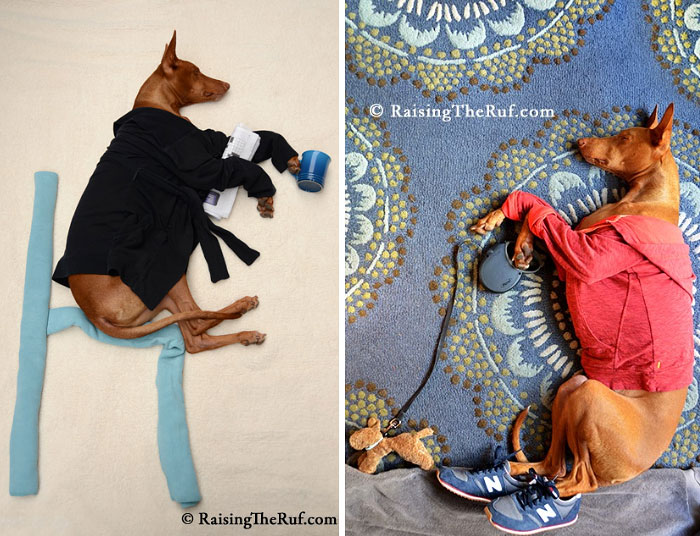 Conheça-Rufus-O-cão-que-tem-divertidas-aventuras-ao-dormir (10)