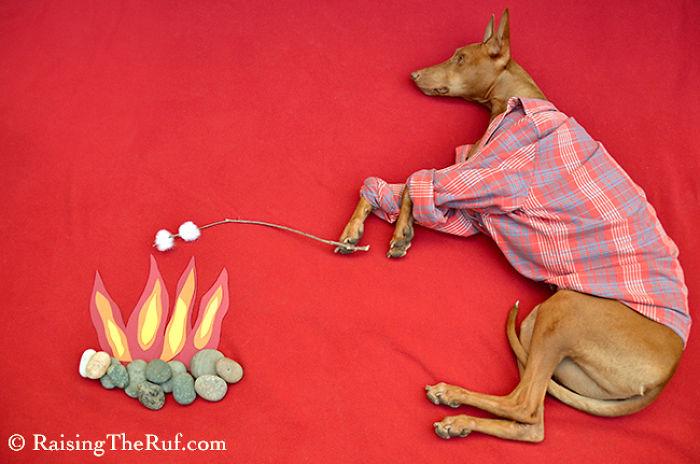 Conheça-Rufus-O-cão-que-tem-divertidas-aventuras-ao-dormir (5)