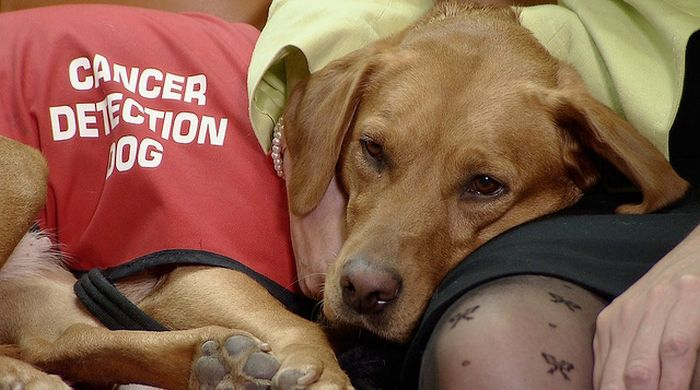 Daisy, a cachorra que detecta câncer  (5)
