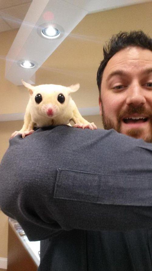 Estes animais apenas querem tirar uma Selfie (19)
