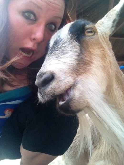 Estes animais apenas querem tirar uma Selfie (2)
