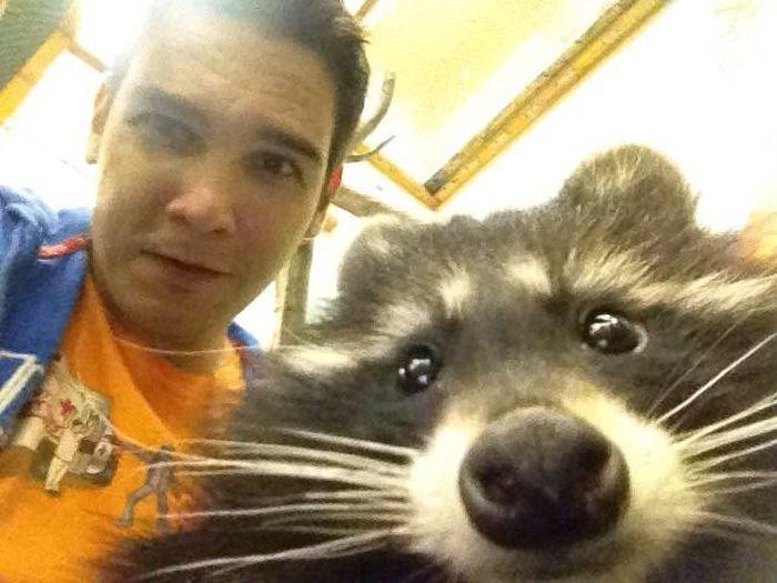 Estes animais apenas querem tirar uma Selfie (7)