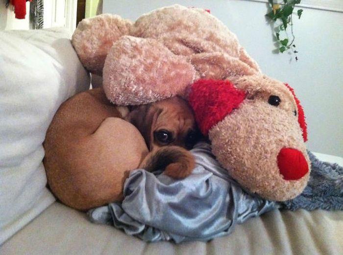 Estes cães adoram brincar de esconde-esconde (11)