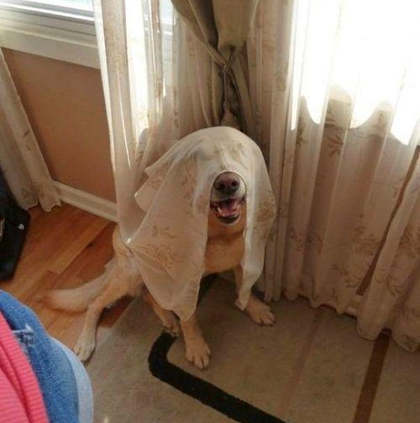 Estes cães adoram brincar de esconde-esconde (13)