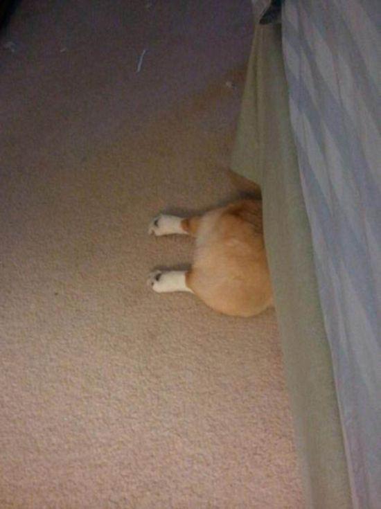 Estes cães adoram brincar de esconde-esconde (16)