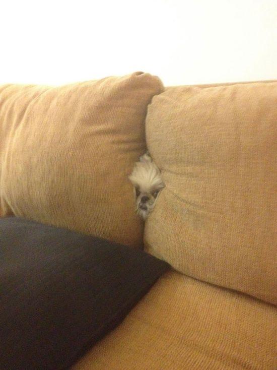 Estes cães adoram brincar de esconde-esconde (17)