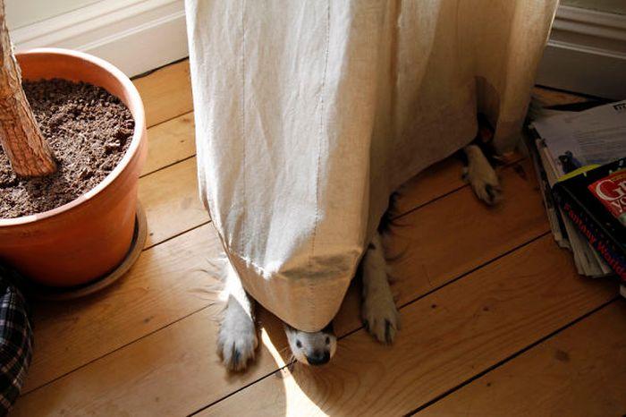 Estes cães adoram brincar de esconde-esconde (2)