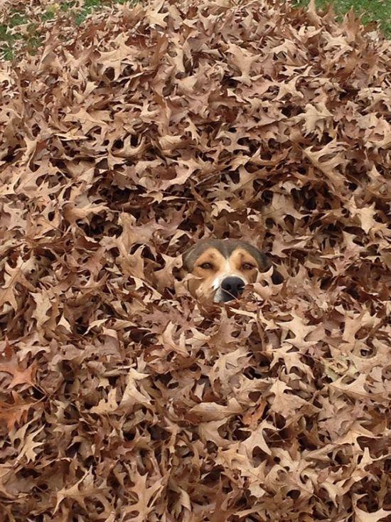 Estes cães adoram brincar de esconde-esconde (21)