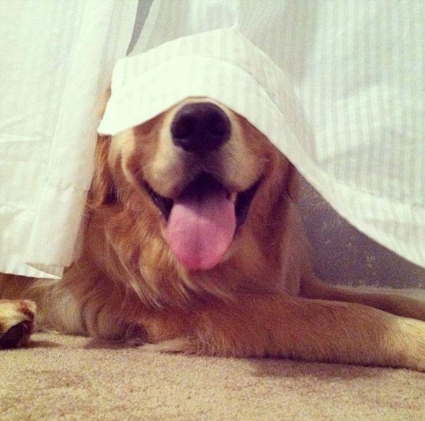 Estes cães adoram brincar de esconde-esconde (23)
