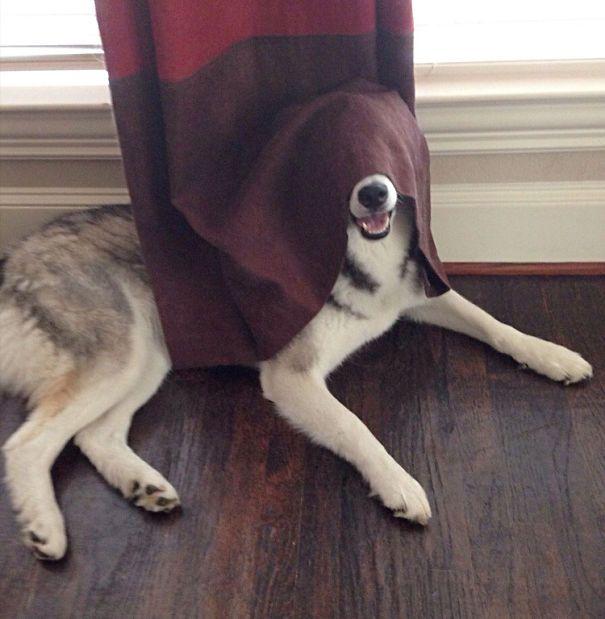 Estes cães adoram brincar de esconde-esconde (24)