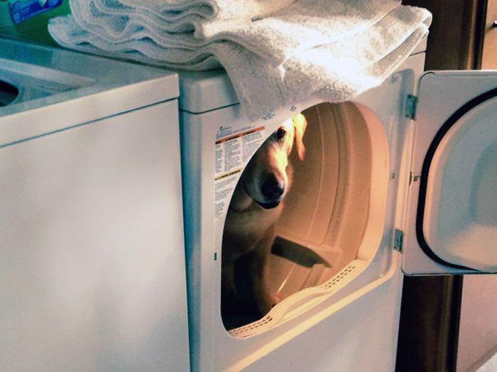 Estes cães adoram brincar de esconde-esconde (25)