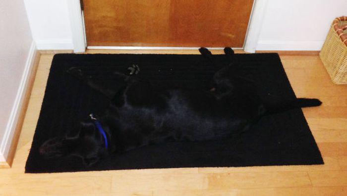 Estes cães adoram brincar de esconde-esconde (4)