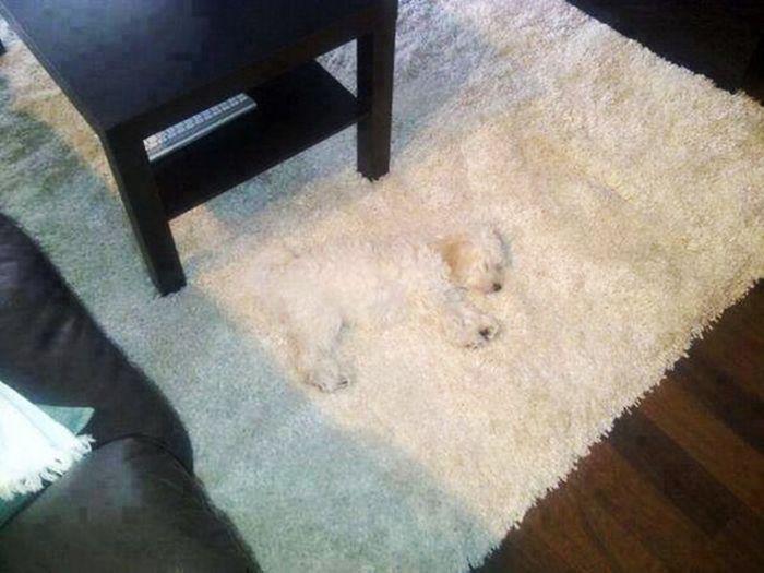 Estes cães adoram brincar de esconde-esconde (7)