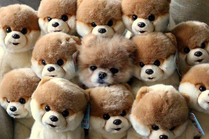 Estes cães adoram brincar de esconde-esconde (9)